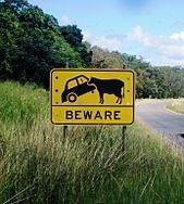 Cow Eats Car
