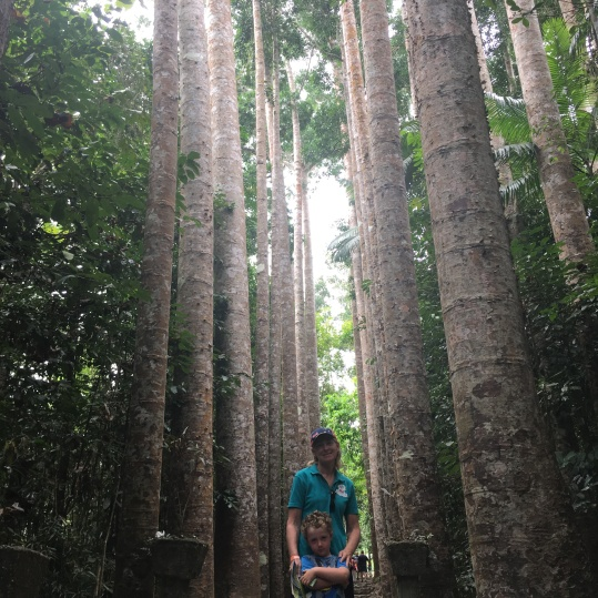 Feeling dwarfed by a row of stunning Kauri Pines