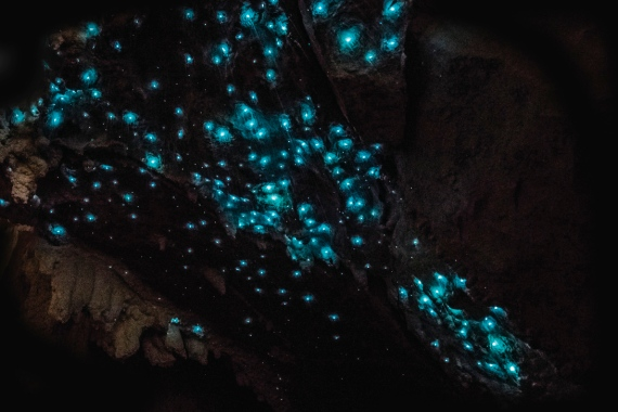 glow-worms-caves-tasmania-australia-2 (2)