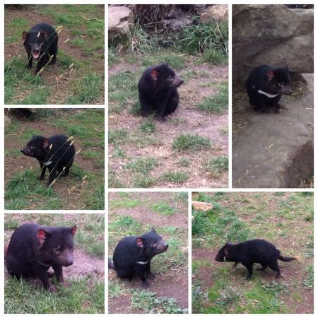 zoodoo-wildlife-park