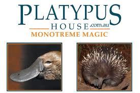 platypushouse