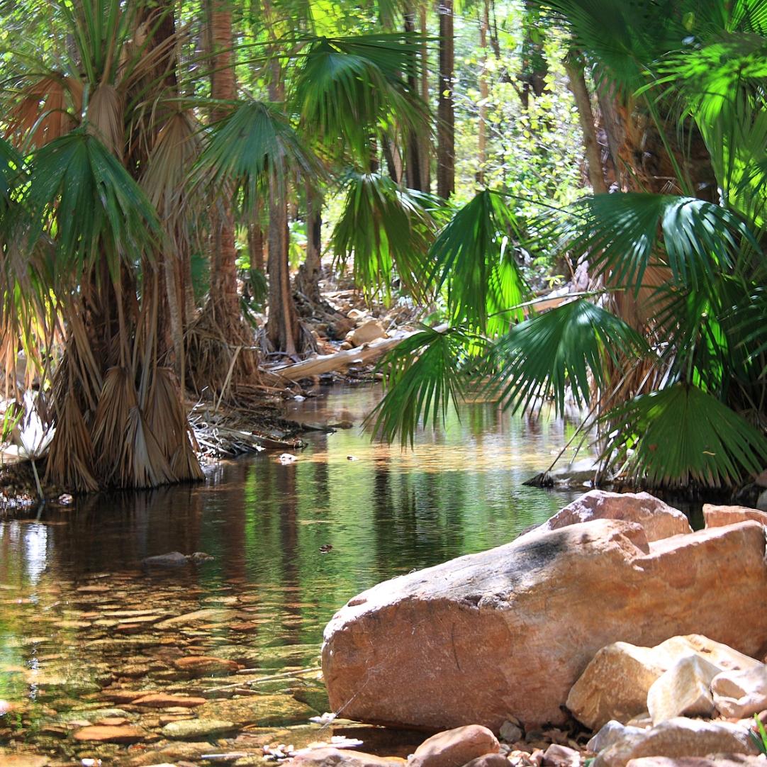 Zebedee Springs El Questro Western Australia